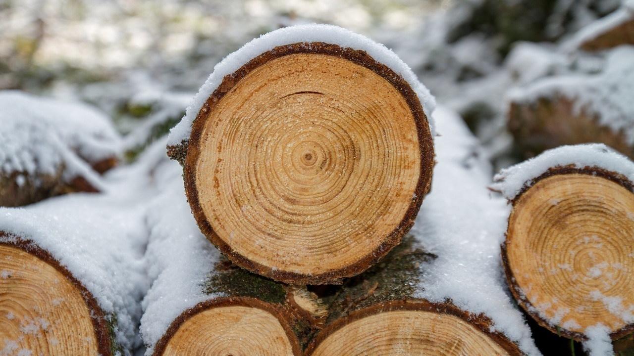 wood-3163292_1280